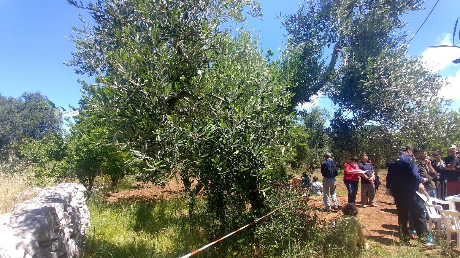 Photos © Elena Tioli - www.vivicomemangi.it