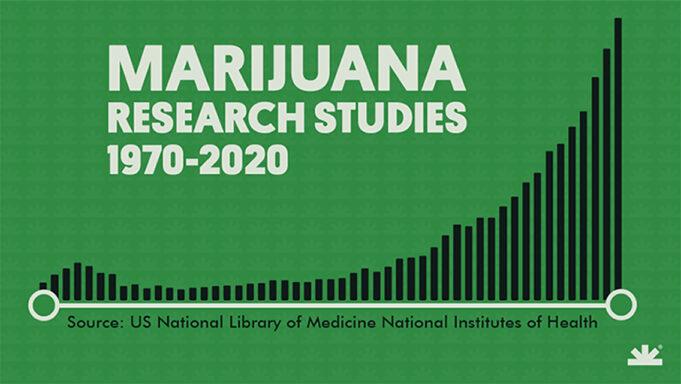 2020: record di articoli scientifici sulla cannabis